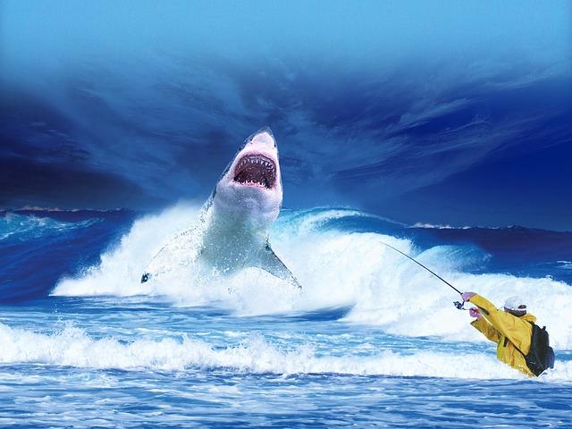 lov na žraloka