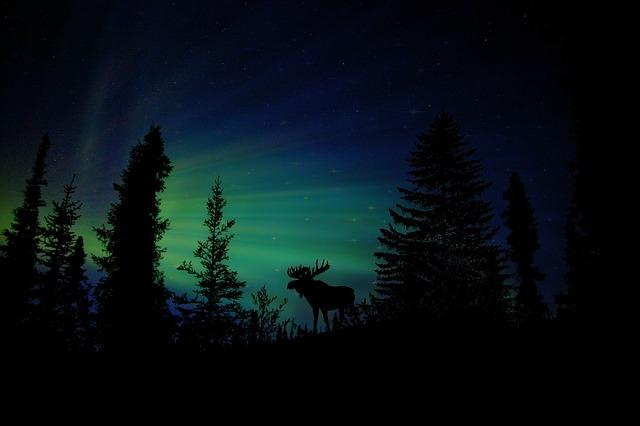 polární tma