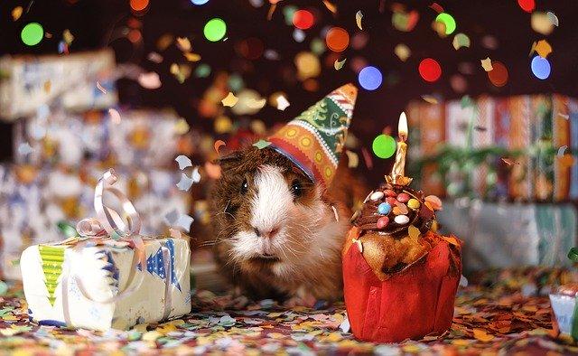do oslavy narozenin můžete zapojit i domácí mazlíčky